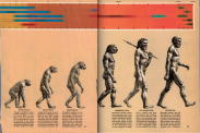 Six homo sapiens and other species depicted from 'monkey' to eventually a standing up human man
