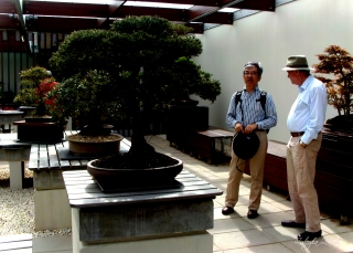 Two people contemplate the National Arboretum Canberra -National Bonsai and Penjing Collection
