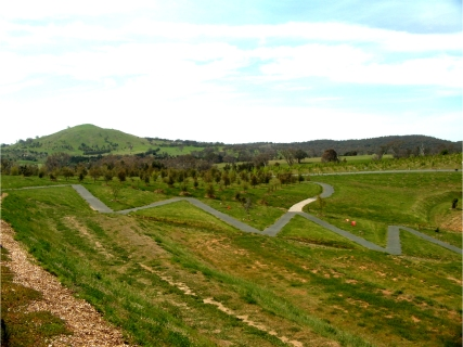Forests at the National Arboretum Canberra