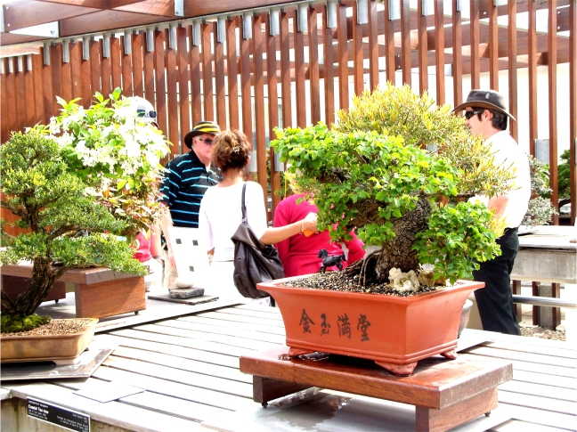 National Bonsai and Penjing Collection (23)
