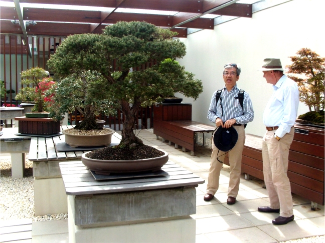 National Bonsai and Penjing Collection (26)