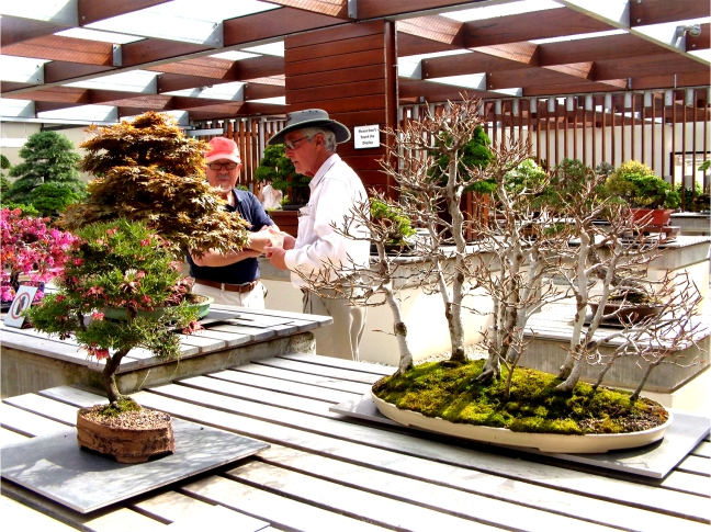 National Bonsai and Penjing Collection (28)