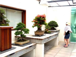Woman looking at Chinese Elm