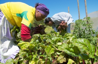 Ecological farming techniques passed onto people living with HIV and AIDS in Hamburg, South Africa. Photo: PWRDF via Flickr.
