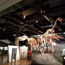 墨尔本博物馆(1)