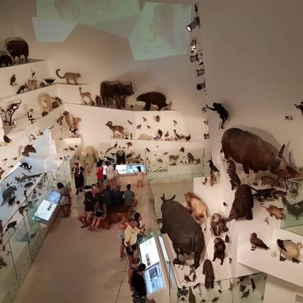 墨尔本博物馆(2)