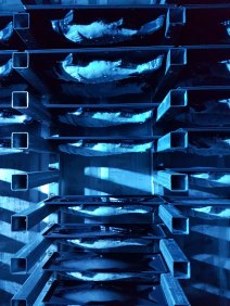 Blue-lit ice trays holding a dozen ice fish, with one gap left for mine