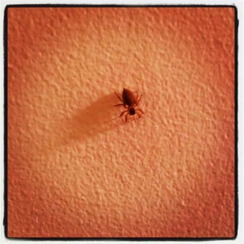 A tiny spider on a centre of an orange wall, in a halo of light