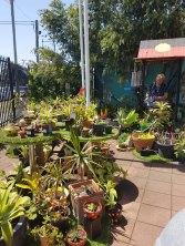 明格莱塔花园(1)