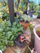 明格莱塔花园(4)