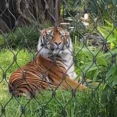 塔龙加动物园(3)