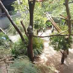 Taronga Zoo (4)