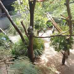 塔龙加动物园(4)