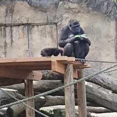 Taronga Zoo (5)