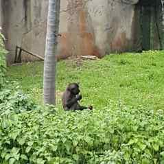 Taronga Zoo (6)