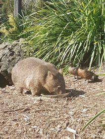 Australian Reptile Park (16)