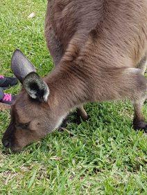 澳大利亚爬行动物公园(17)