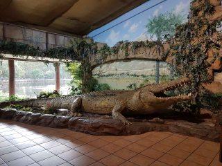 澳大利亚爬行动物公园(2)