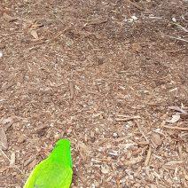 Australian Reptile Park (5)