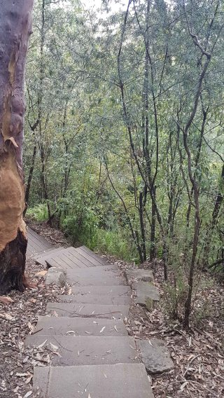 Somersby Falls - middle falls steps