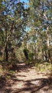 Kincumba Mountain - Kanning Walk