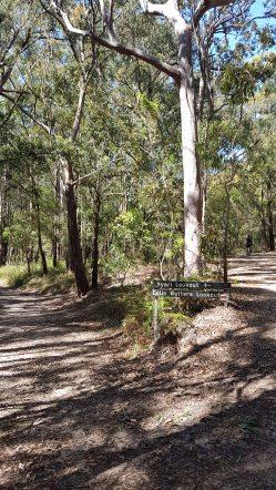 Kincumba Mountain - Nyari Lookout path