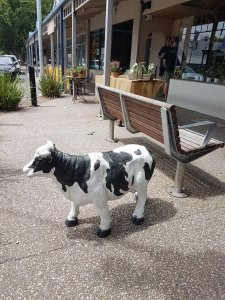A quaint Bacchus Marsh street is home to a small cow statue