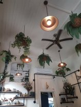 Photo of the ceiling inside Hunter's Corner cafe. Various green plants hang from the ceiling and lights. In the background is an open doorway and various, mostly empty, bottles