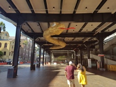 "A woman and man are seen in the foreground from behind, shading their eyes as they lean back to take in the massive snake in the oveseas passanger terminal at The Rocks, Sydney. The snake's body is textured yellow, with a massive red tongue extended and the Chinese characters for ""happiness"" written across its eyes, to signify good fortune in the coming year"